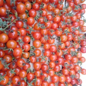 TOMATE CHERRY ROJO CEREZA